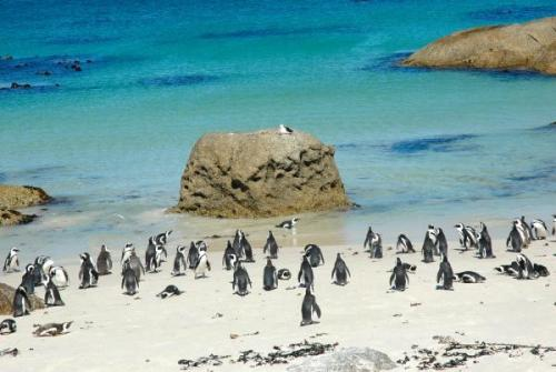 The peguins  WB