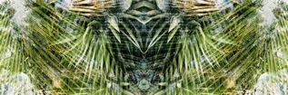 the mantis SMALL